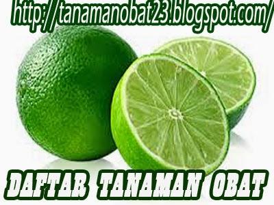 http://tanamanobat23.blogspot.com/2015/03/tanaman-obat-jeruk-nipis-citrus.html
