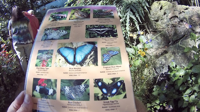 Butterfly Rainforest, Gainsville