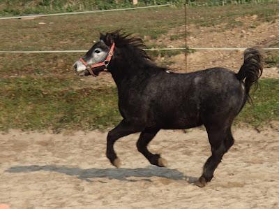 konie, kucyki, jazda konna, użądlenie u koni, choroba konia, leczenie rany na kłębie