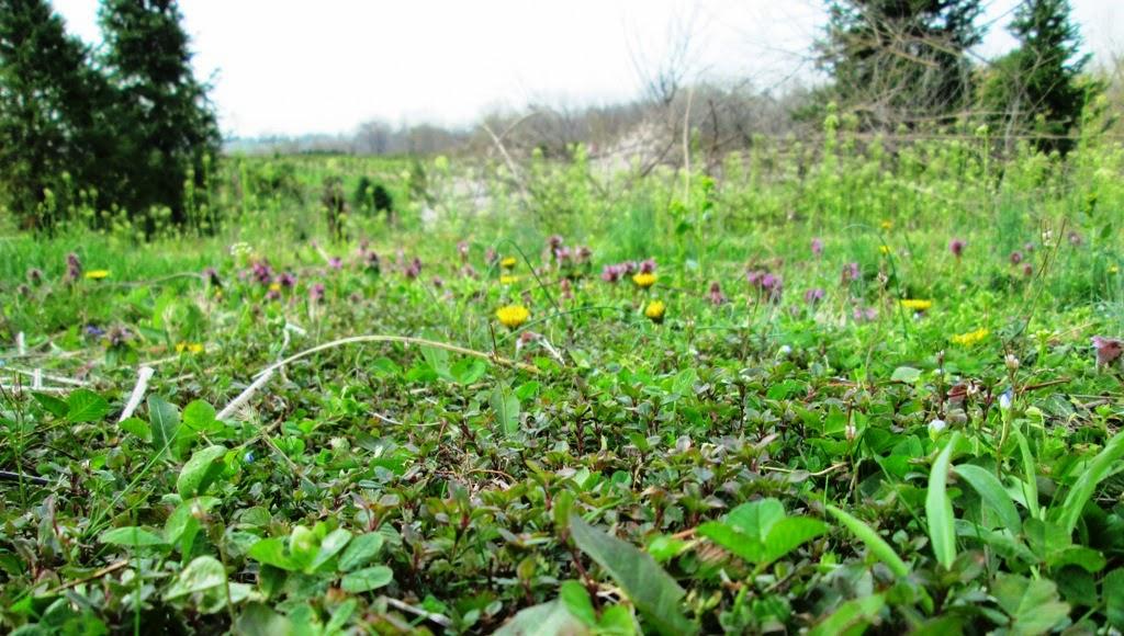 woodland herbs glasgow