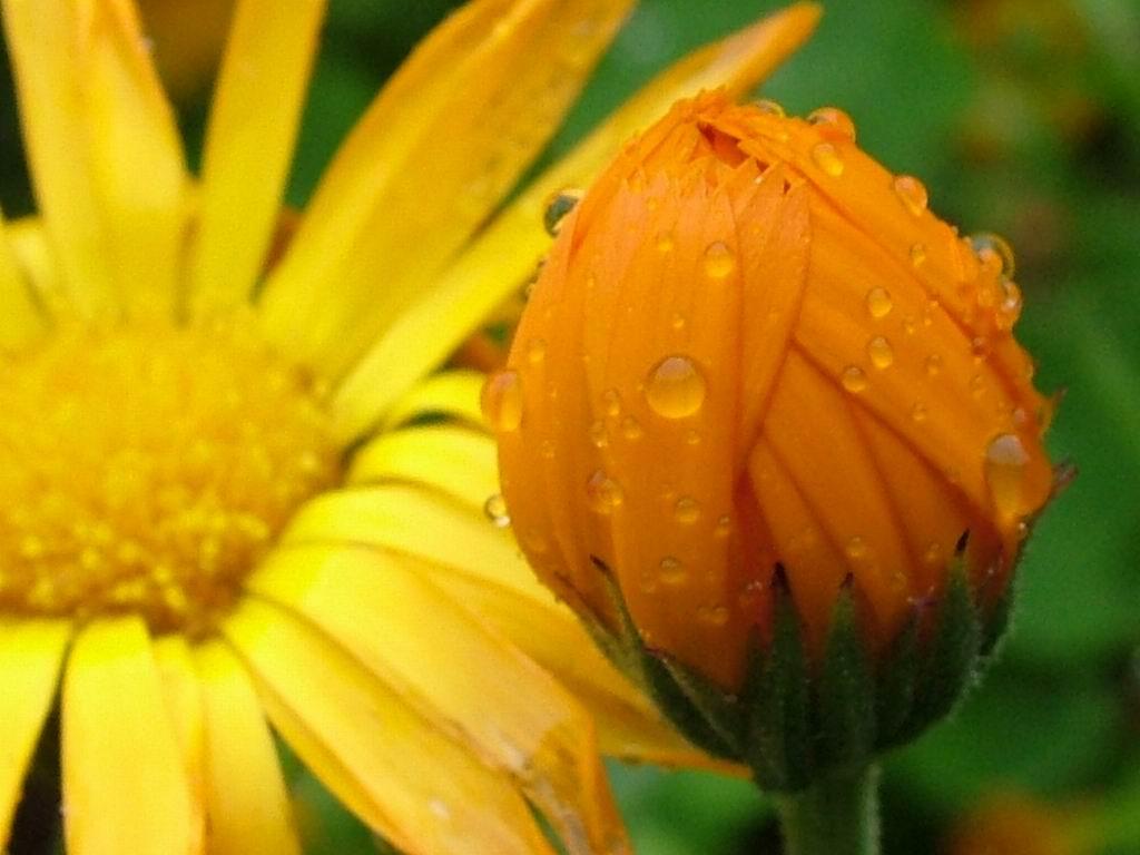 http://2.bp.blogspot.com/-sBUIyYU8NoE/TofXY3PqbfI/AAAAAAAAC6Y/7kl58lsV-oo/s1600/orange-flower_2011.jpg