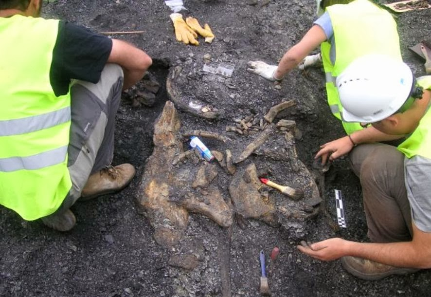 New armoured dinosaur species found in Spain