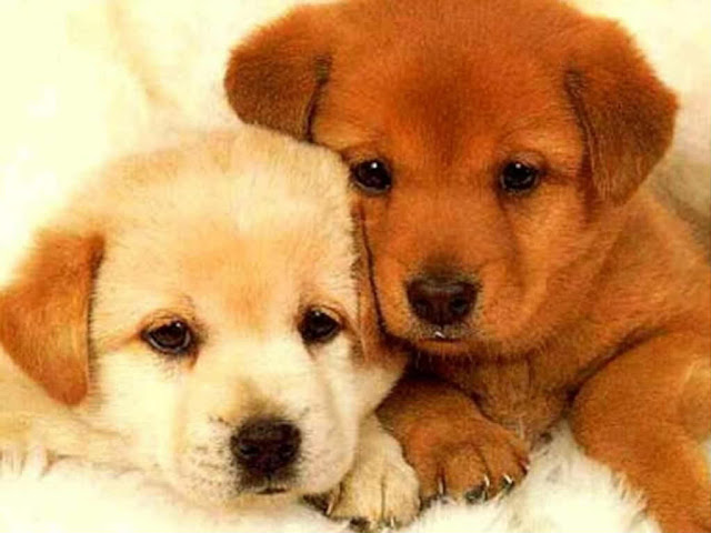 2Cute puppies