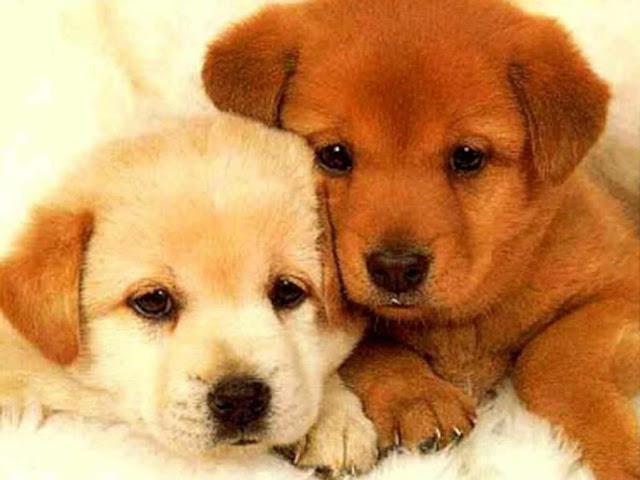 2Cute puppies