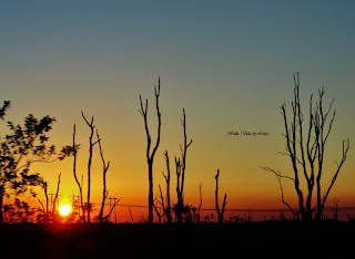 Florida Everglades sunset