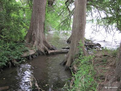 A orillas del Lago Austin / Austin Lake En realidad es un río