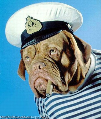 cool sailor dog