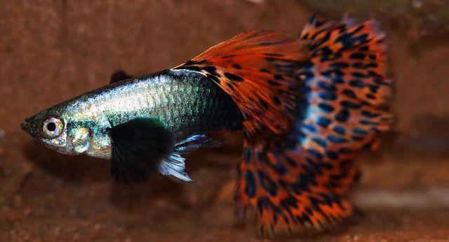 Online marine fish store india marine world for Fish antibiotics petco