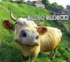 poda pothey - malayalam image
