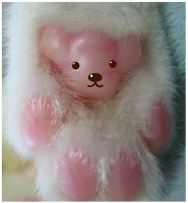 每隻喵爪背後…..都隱藏著一只小熊