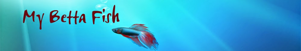 Guide betta fish care for Betta fish care guide