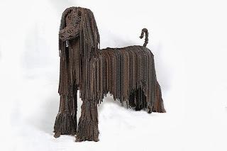 афганска хрътка снимки кучета порода верига колело