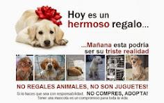 Los animales NO son juguetes