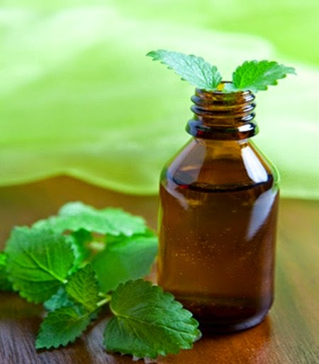 Mint to finish with pests