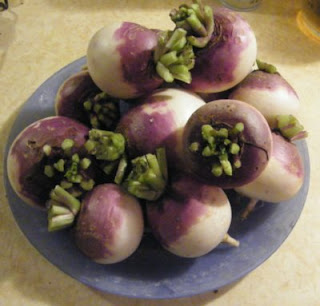 Scalloped Turnips and Potatoes