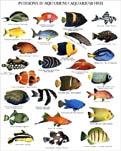 Como pez en el mar blog de uss for Peces goldfish tipos