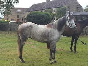 NATURAL HORSES FOR SALE