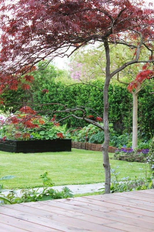 I haven hos evigglade ♥: smukke træer med rødt løv