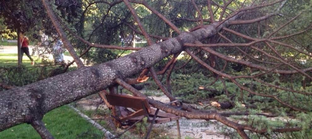 """los árboles de Madrid se """"caen"""""""