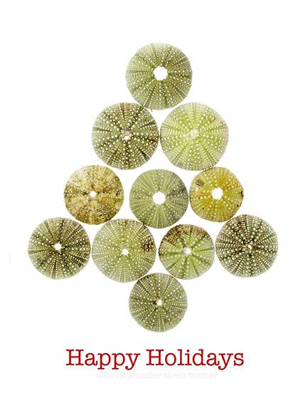 happy holidays seasons greetings echinoderm echinodermata seaurchin green red test