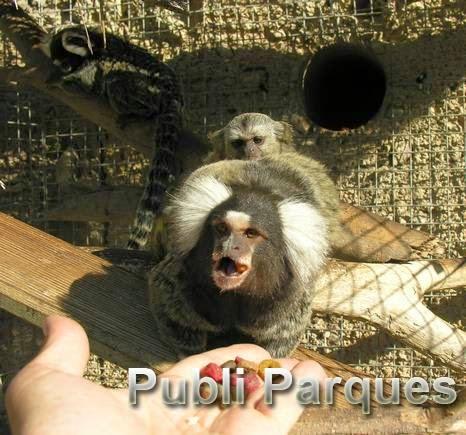 Primates de Terra Natura Benidorm