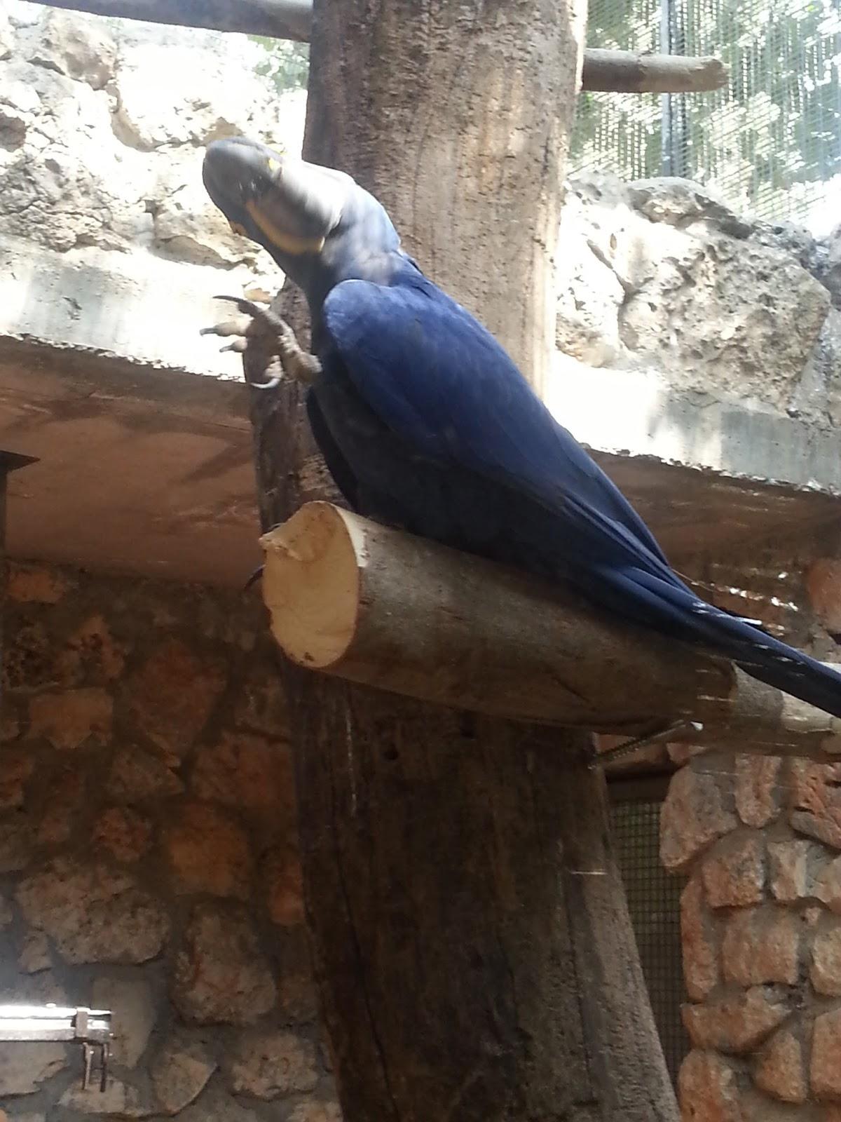 """תוכי כחול - גן חיות התנ""""כי בירושלים"""