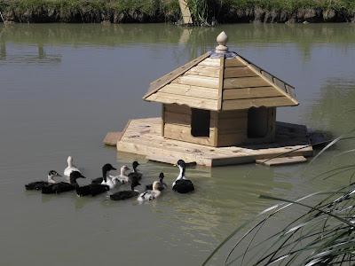 Timber Duck Housing Flyte so Fancy