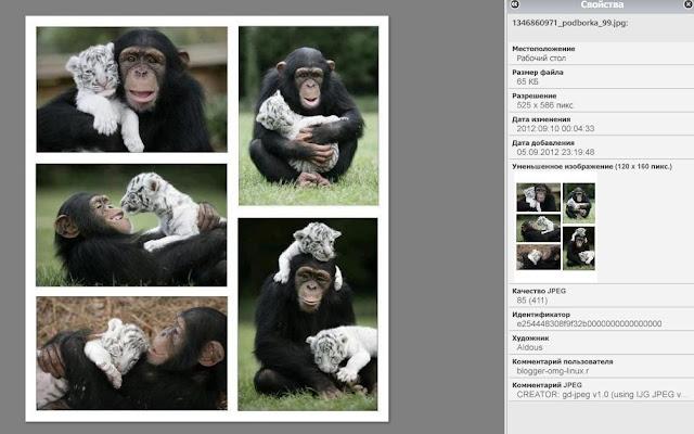 Exif на фотографиях, как изменить