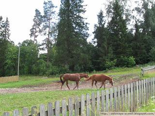 лошадки из Мессили
