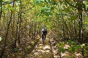 Pădure Hodoş