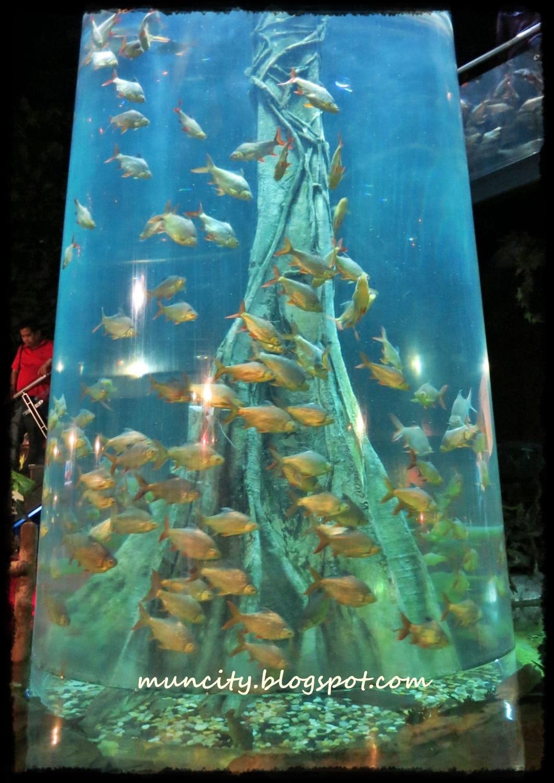 Lalalaland...: Aquaria KLCC