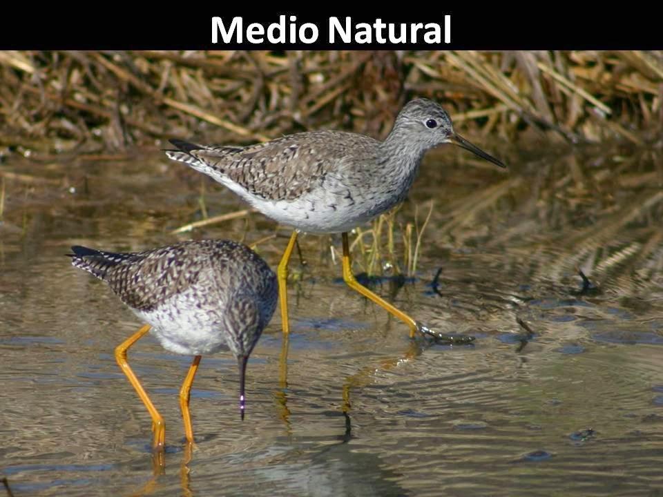 Ornitología Málaga. Ecoturismoglobal