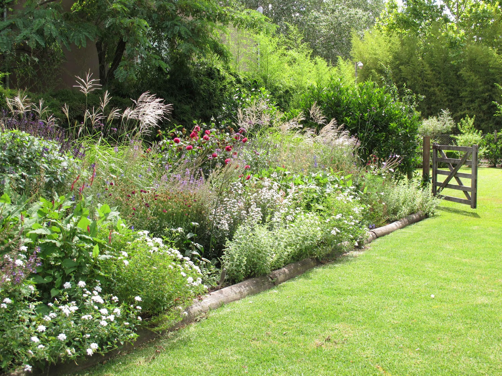 En el jardin final de las espuelas y otras anuales for Plantas perennes para jardin