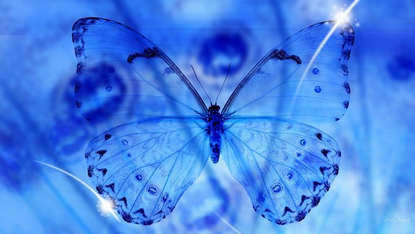 Beautiful Blue Butterfly Images HD Download