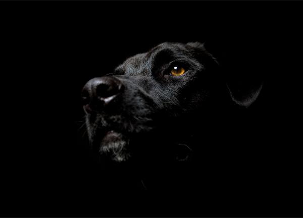 http://2.bp.blogspot.com/-sGcihdJlX1I/TkXCYXQtGYI/AAAAAAAAAUE/hehfQ8OpCgA/s1600/noiresque-dog.jpg