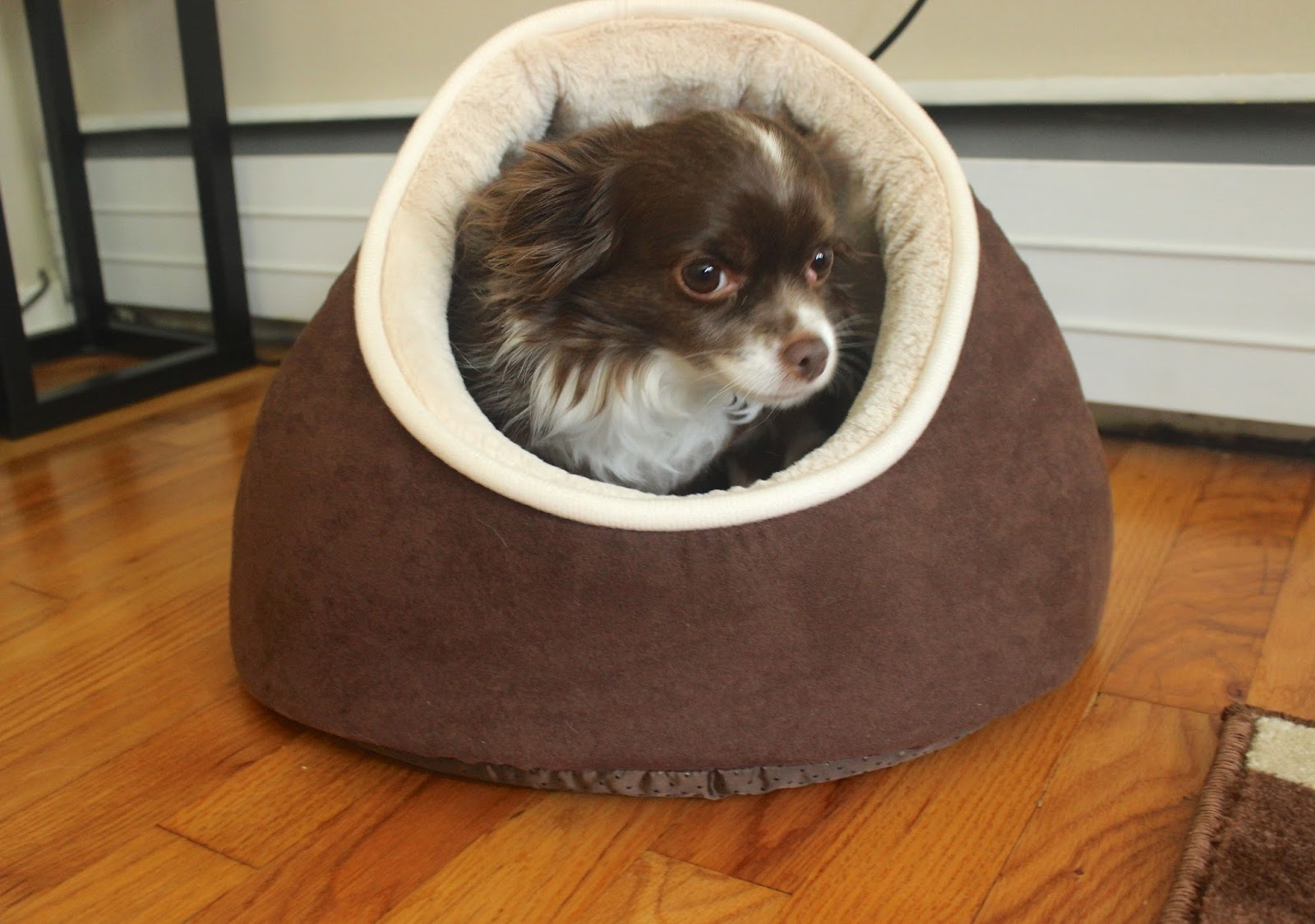 85 Cribs For Small Dogs 11 Luxury Dog Houses Worthy