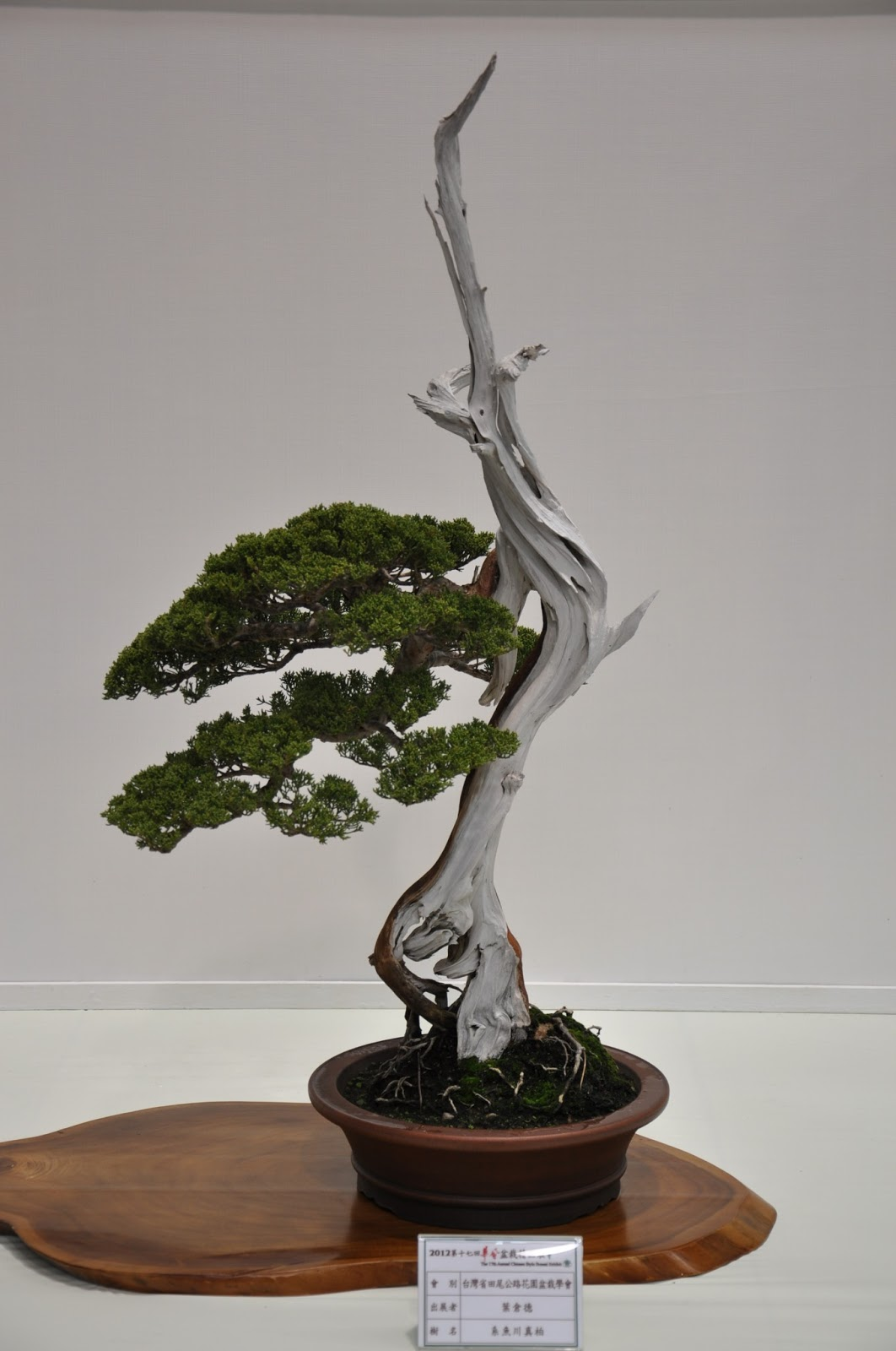 All In One Bonsai And Ceramics History Of Bonsai