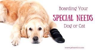 Special Needs Pet Boarding