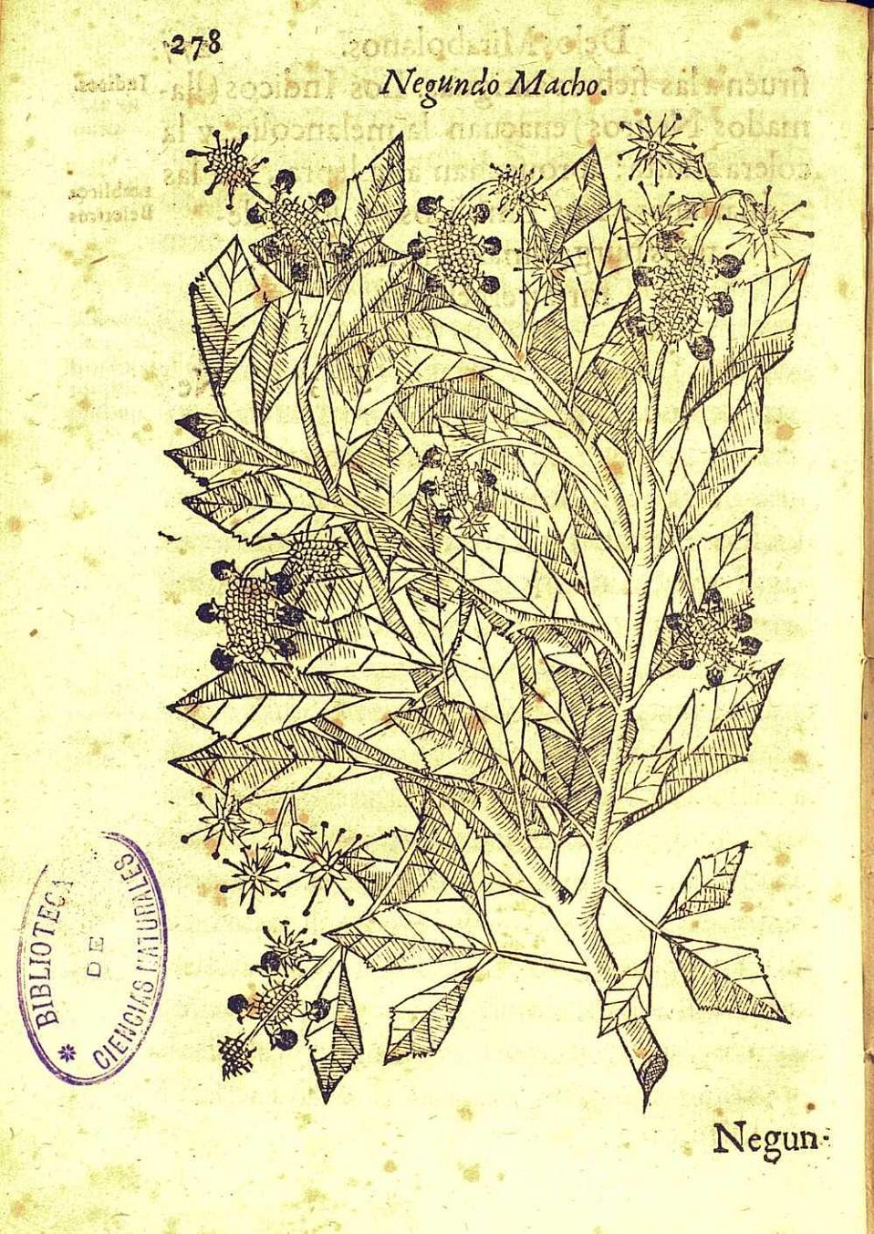 Slimgrape 39 s goulash of cool photos tumview for Biblioteca digital real jardin botanico