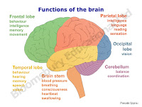 Brain Functions1