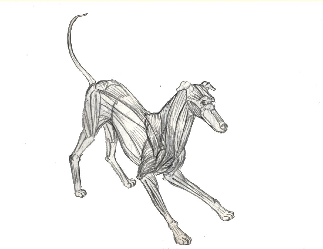Emejing Dog Anatomy A Coloring Atlas Ideas - Coloring 2018 ...