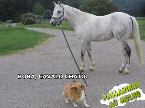 cachorro puxando cavalo, passarinho ao molho