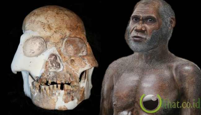 Spesies Baru Manusia