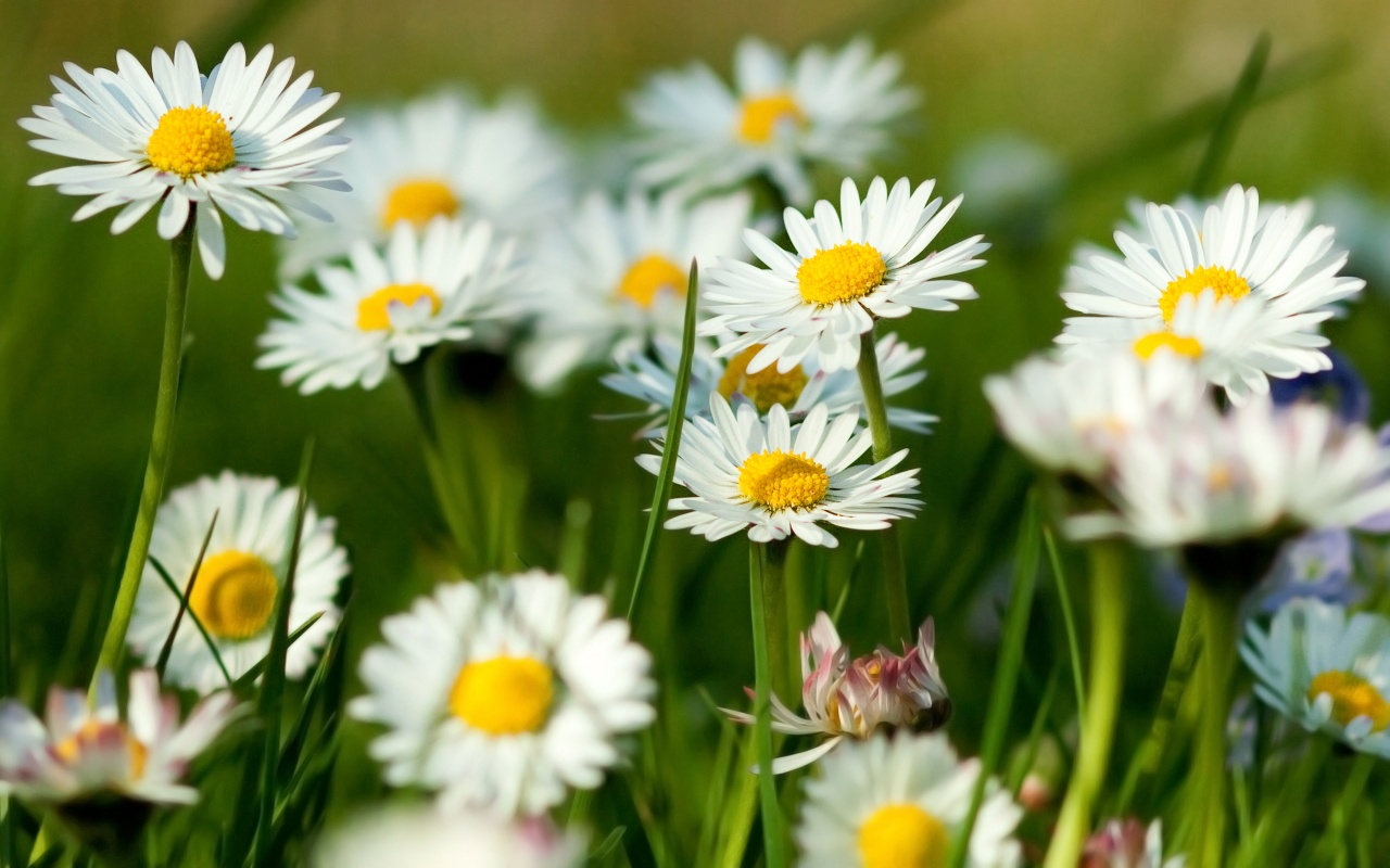Spring flower wallpaper nature wallpaper - Flowers that bloom from spring to fall ...