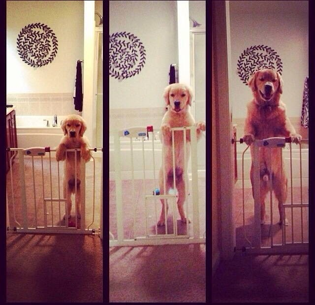 Cute dogs - part 25 (50 pics), funny dog pictures, dog and puppy photos