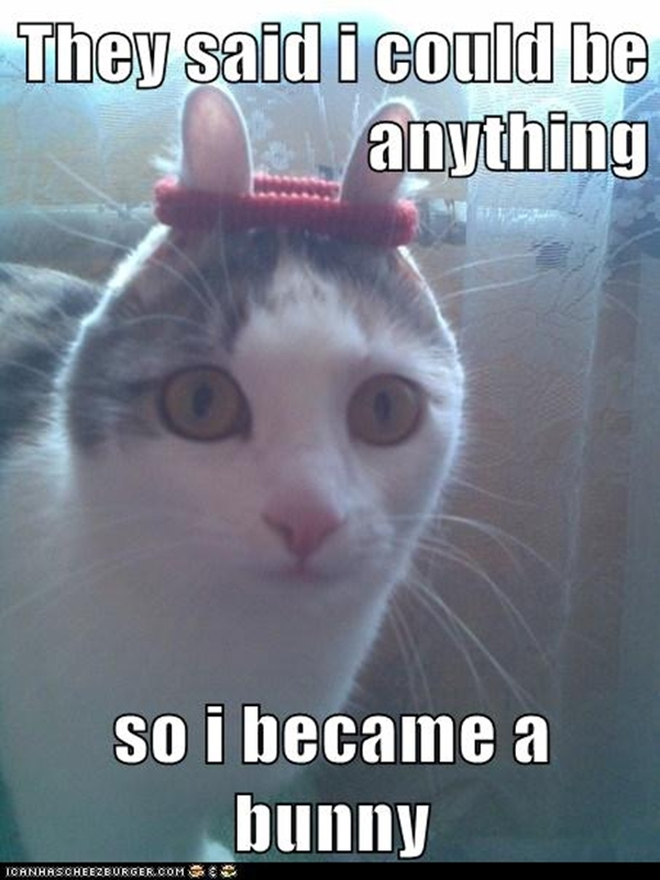 Funny Animal Meme Images : They told me i could be anything pics amazing