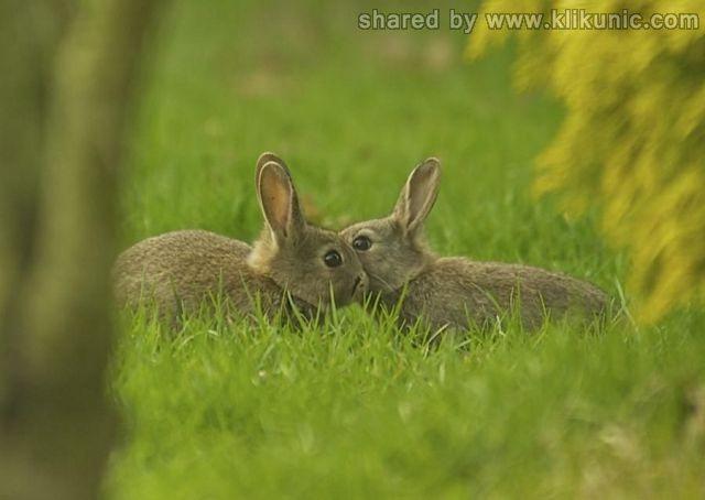 http://2.bp.blogspot.com/-sIrJZHQvpHo/TXWDzQ1BqvI/AAAAAAAAQL8/2U8czrraXK8/s1600/these_funny_animals_632_640_12.jpg