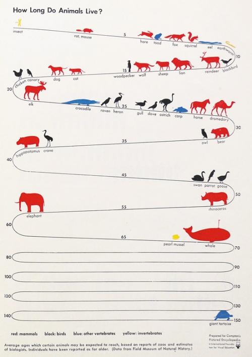 Infografía Cuánto viven los animales?