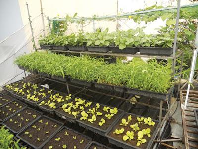 Thiết kế trồng rau sạch tại nhà