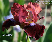 SDB seedling DX27c